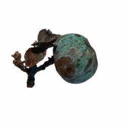 Forkobret-aebel-kvist