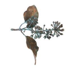 Efeu kvist med forkobring og bær