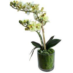 Kunstig hvid orkideé