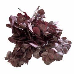 Hortensia i lilla til dekorationer